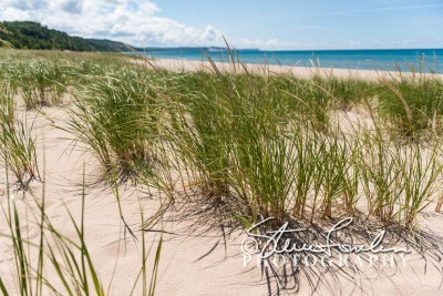 BD209-Elberta-Beach-Grass