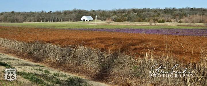 161-Lavendar-farm-Field-Luther-OK1.jpg