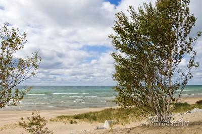 BD009-Lake-MichiganBirches-1.jpg
