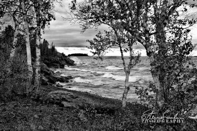 BD011-Lake-Superior-Birch-Study-6.jpg