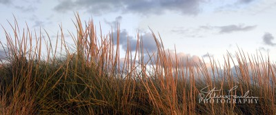 BD021-Dunegrass-at-Sunset-11.jpg