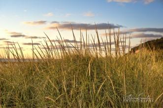 BD122-Sunset-Dunegrass.jpg