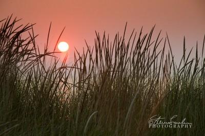 BD140-Sunset-Beachgrass-2.jpg