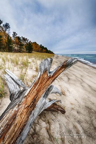 BD165-Superior-Beach-Log.jpg