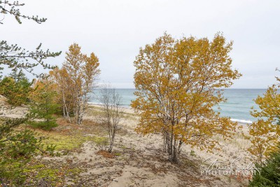 BD166-Lake-Superior-Birches-From-The-Trail.jpg