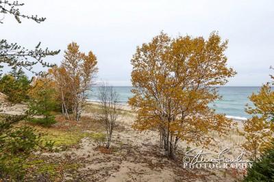 BD166-Superior-Birches.jpg