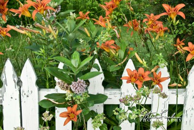 FLR057-Orange-Lillies-Picket-Fence-1.jpg