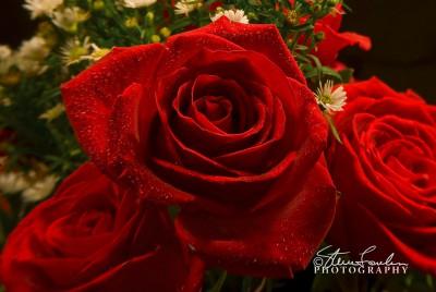 FLR119-Red-Roses-1.jpg