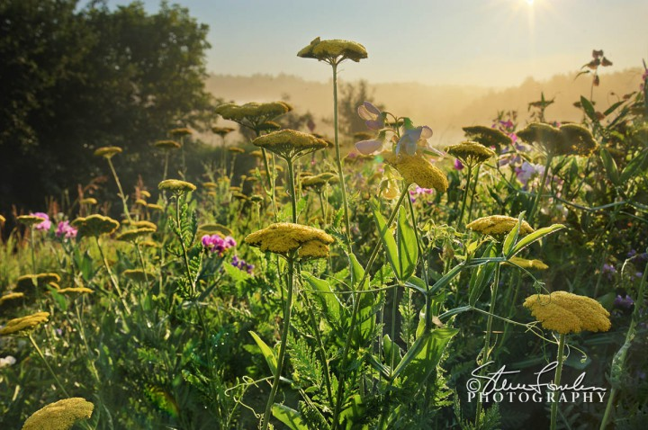FLR122-Summer-Wildflowers.jpg