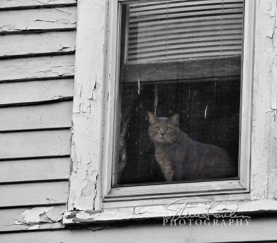 MSC113-Window-Cat.jpg