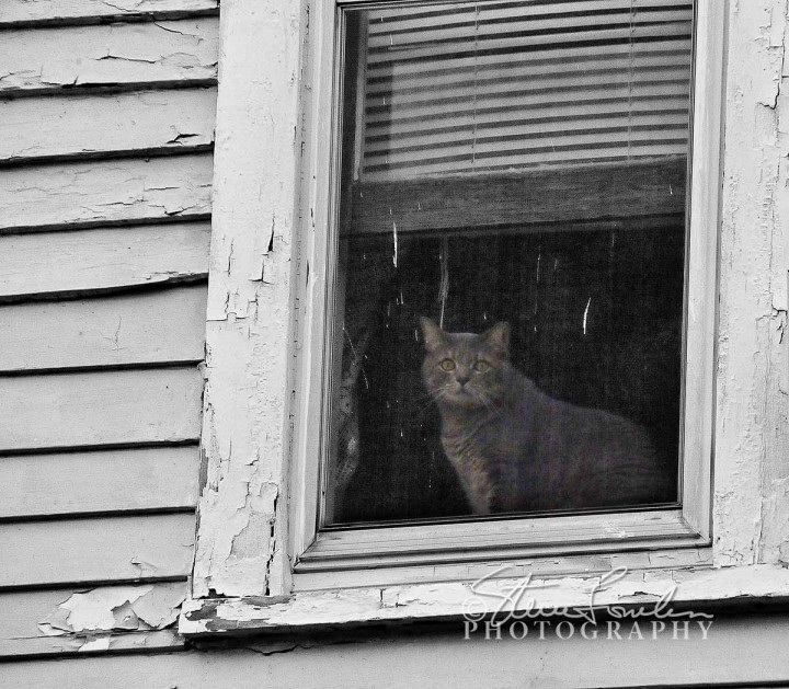 MSC113-Window-Cat.jpg