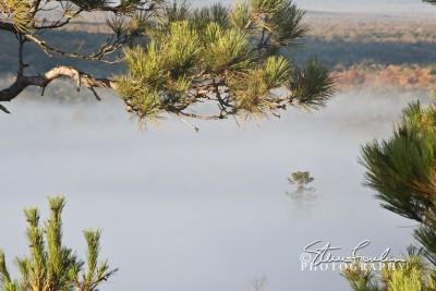 MSC172-Near-Far-Pines.jpg