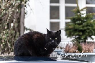 Passau-Cat.jpg