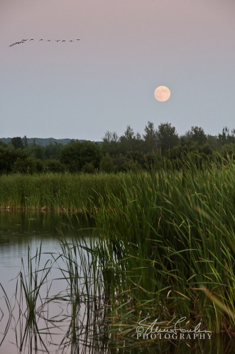 SUN097-Moonrise-July-2010-2.jpg