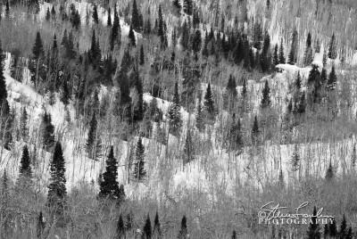 Steamboat-Trees.jpg
