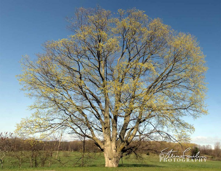 TRE045-Big-Tree-Spring.jpg