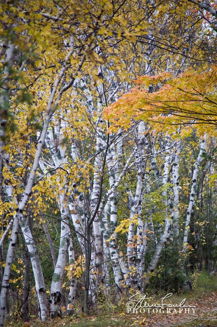 TRE070-Camp-Birches.jpg