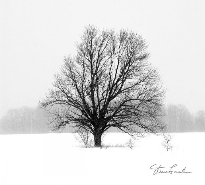 TRE108-Lone-Tree.jpg