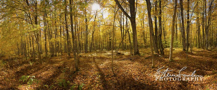 TRE131-Golden-Autumn-Pano1.jpg