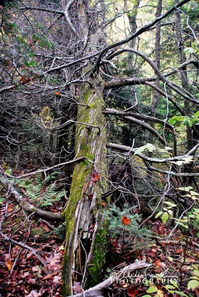 TRE156-Twisted-Tree.jpg