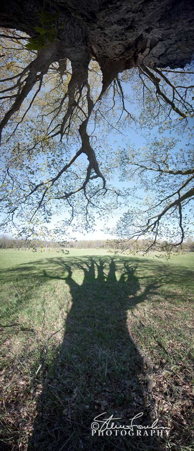TRE182-Big-Tree-Shadow-3.jpg