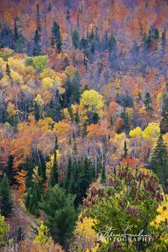 TRE184-Mt-Brockway-2.jpg