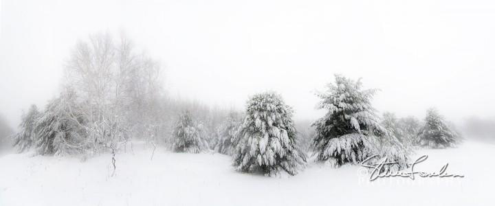 TRE195-Blizzard-Pines-pano.jpg