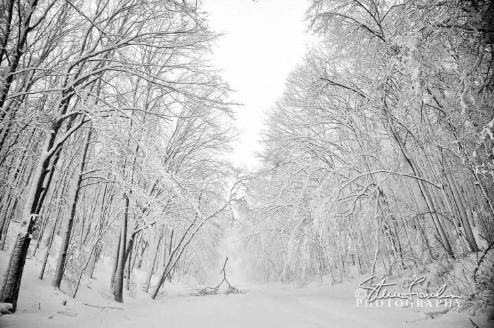 TRE196-Lobb-Road-Blizzard.jpg