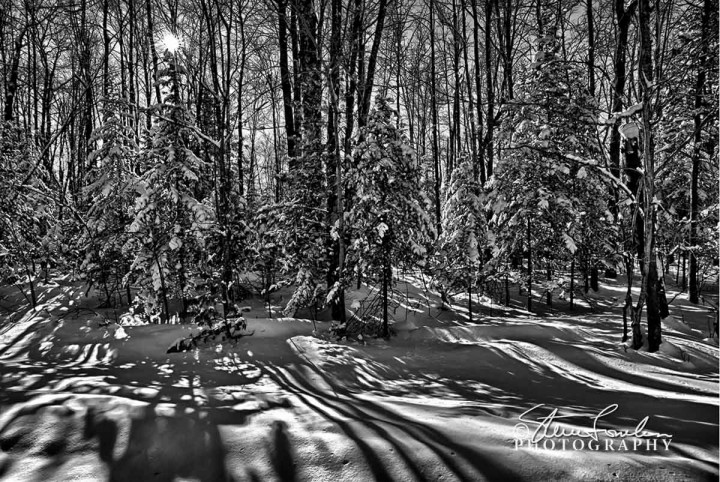 TRE204-Winter-Shadows.jpg