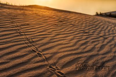 BD249-Dune-Tracks-#1-