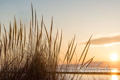 BD308-Sunset-Dunegrass-