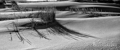 BD328-Dune-Grass-