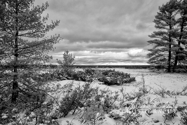 BD352-Cathead-Bay-Winter-Dune-