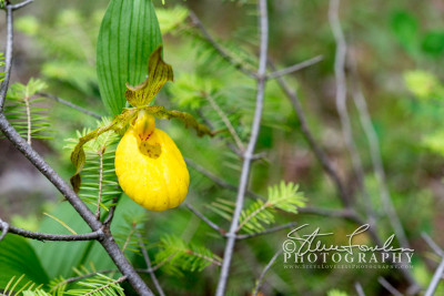 FLR154-Yellow-Lady-Solo-#2-watermarked