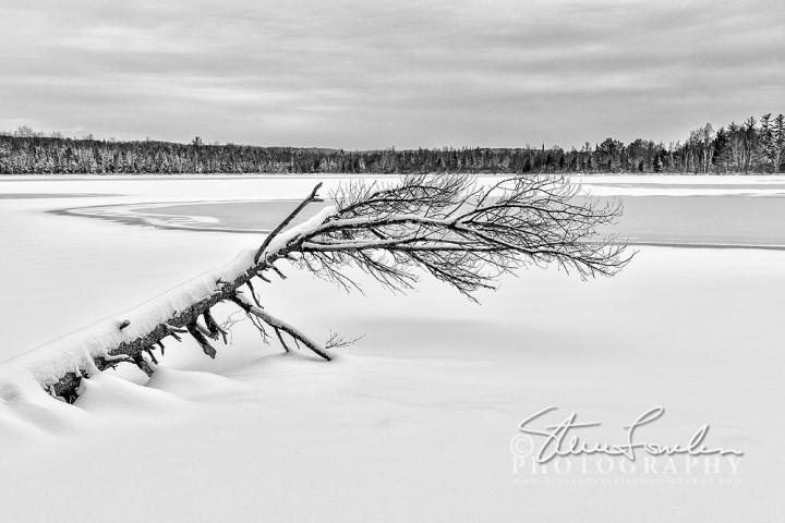 MSC380-Fallen-Tree-At-Loon-Lake